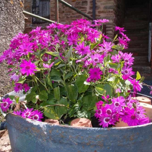 Flowers in a pot at Self Catering Family Farm Cottage at Heath Farm in Craven Arms Shropshire